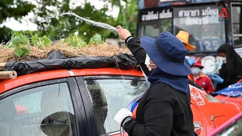 Agar Tetap Bisa Makan, Atap dan Kap Mesin Taksi Dijadikan Kebun Sayuran di Thailand 02