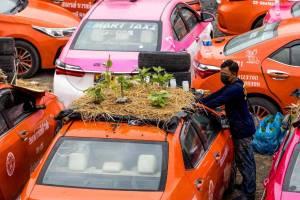 Agar Tetap Bisa Makan, Atap dan Kap Mesin Taksi Dijadikan Kebun Sayuran di Thailand